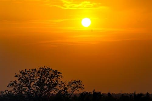 Безкоштовне стокове фото на тему «sillhoutte, вечірнє сонце»