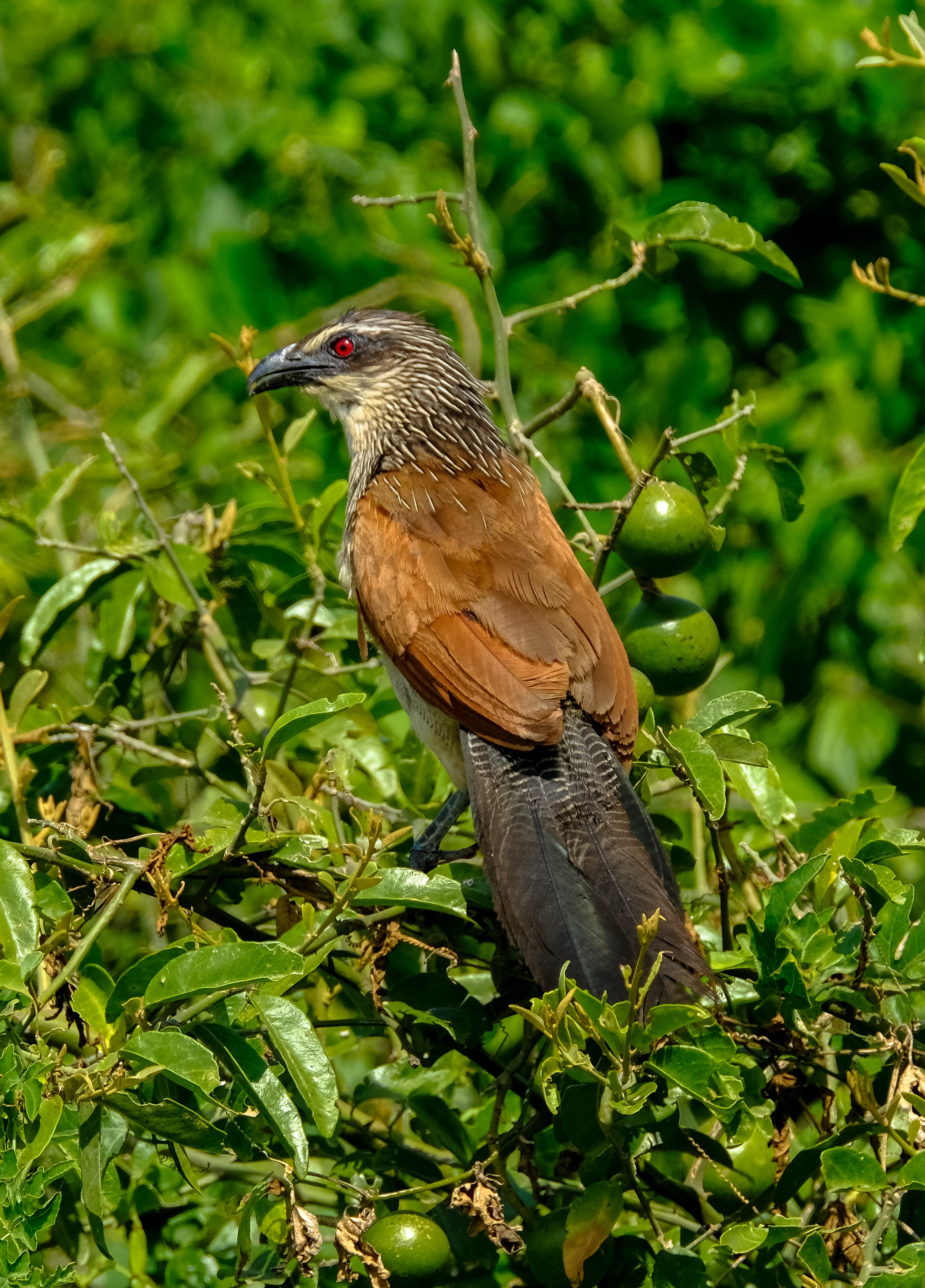 Brown Bird on Branch