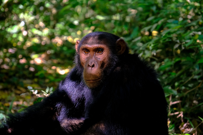 Monkey Sitting Beside Plant