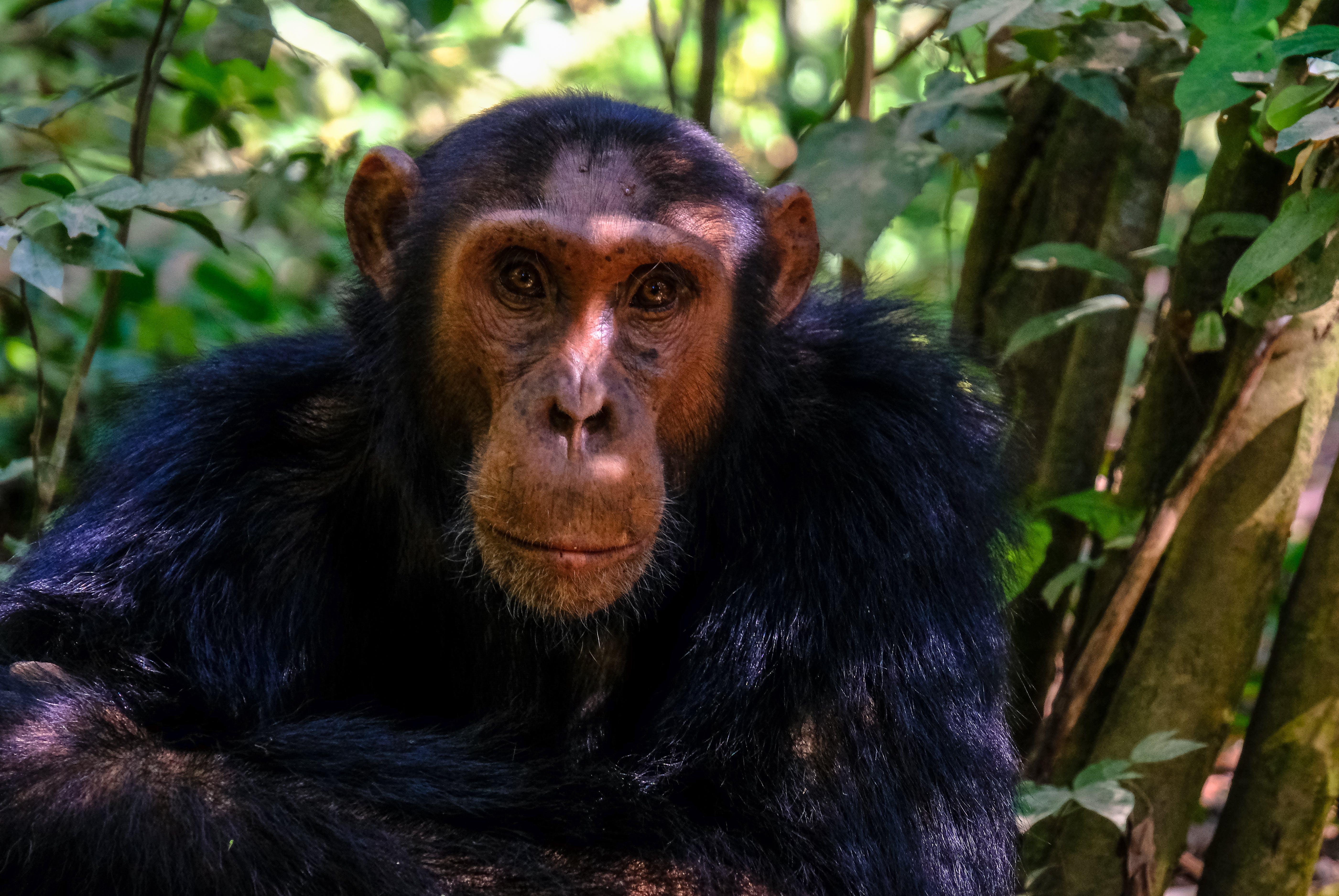 Primate Sitting Beside Tree