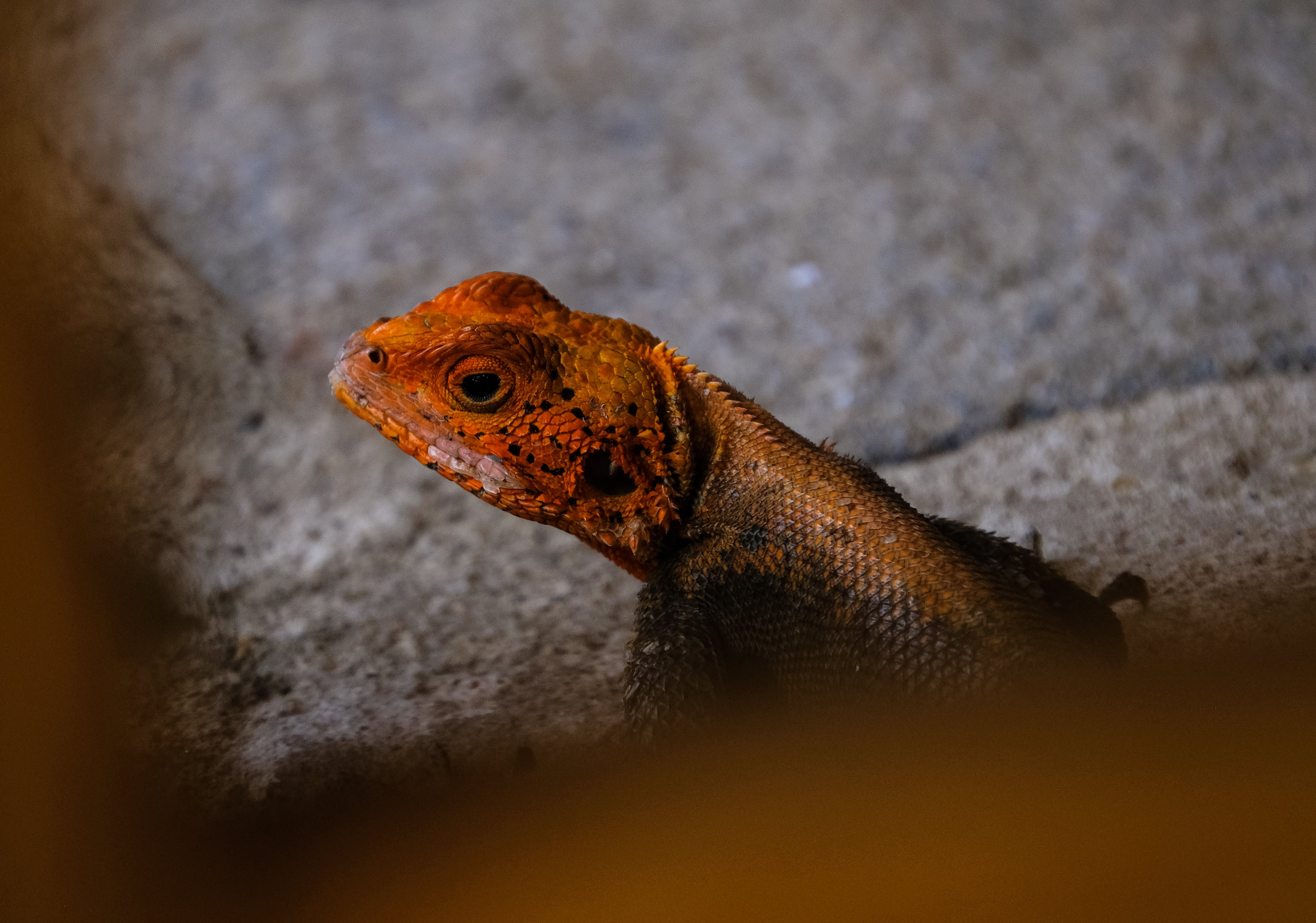 Selective Focus Photography Of Orange And Black Lizard