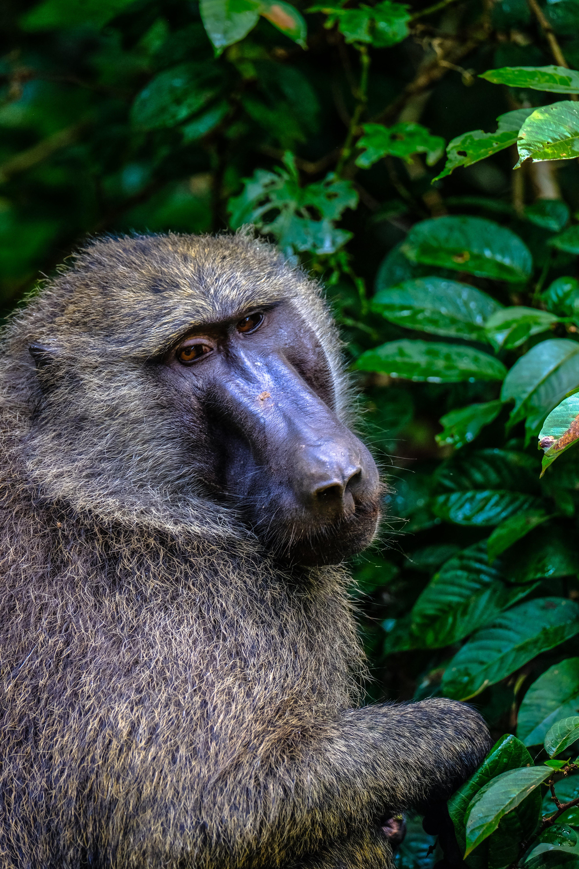 Monkey Near Green Leafed Tree