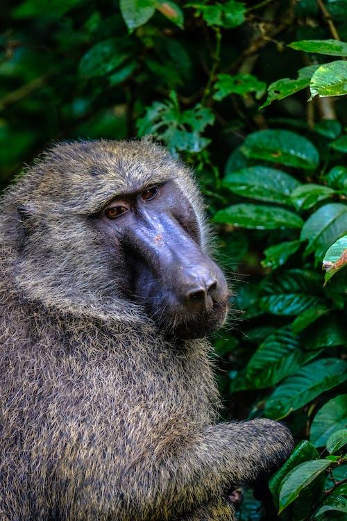 동물, 동물 사진, 야생동물