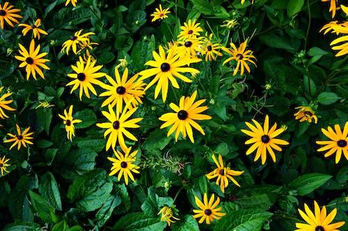 Free stock photo of blossom, bright, flower, foliage