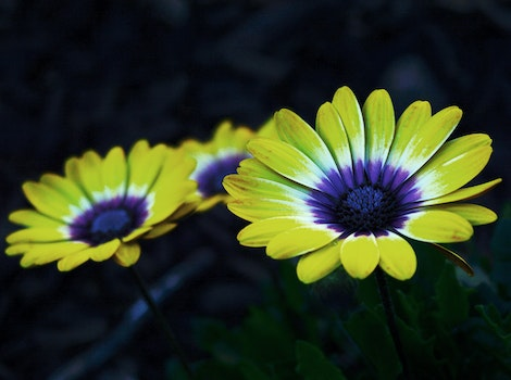 Yellow and Purple Petaled Flower
