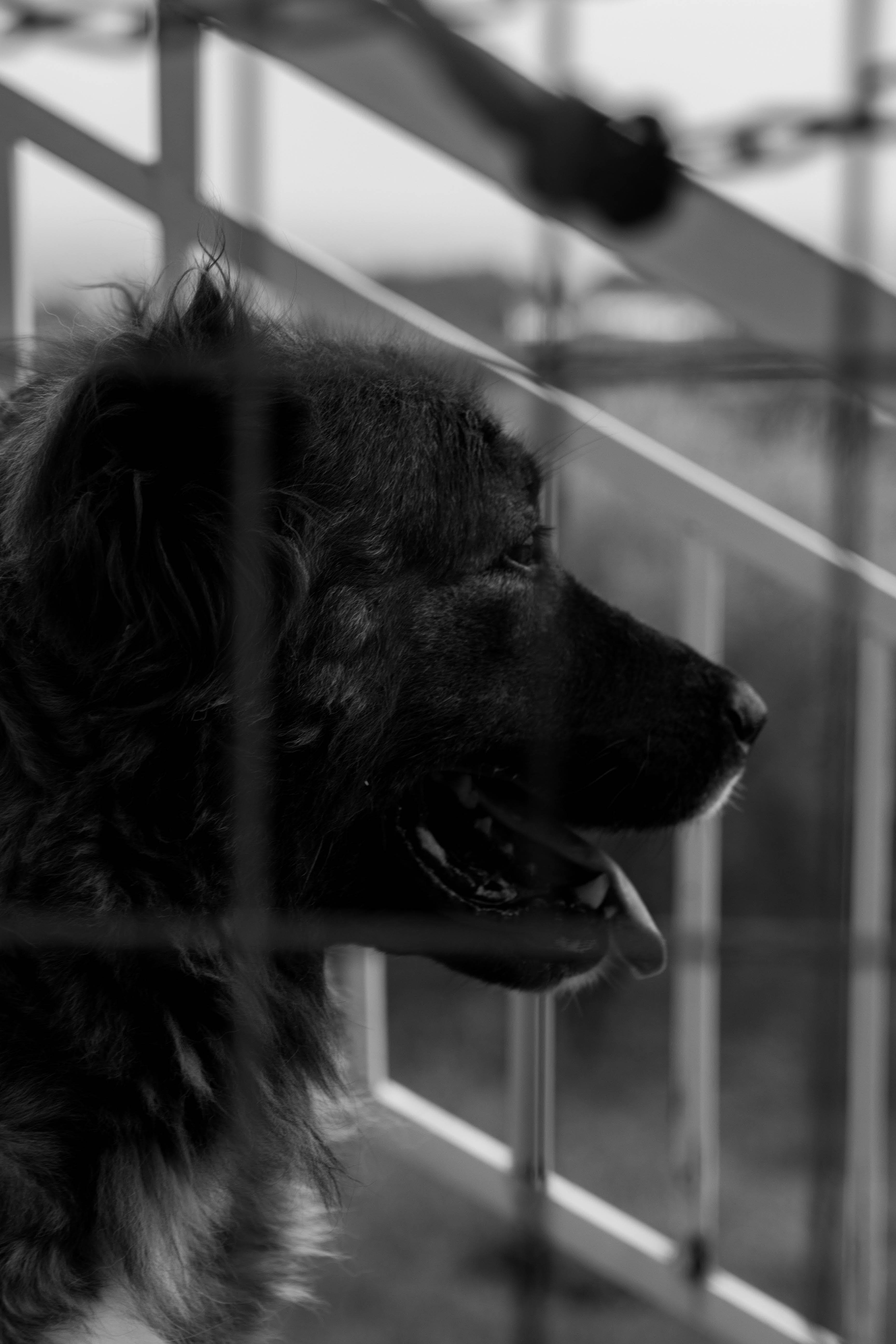 Kostenloses Stock Foto zu beste freunde, canon, hund, profil