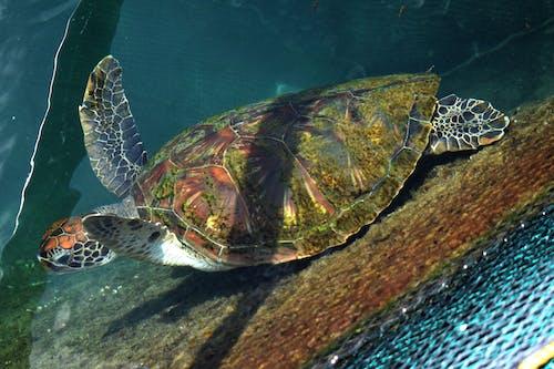 Gratis lagerfoto af dyr, havskildpadde, ved havet