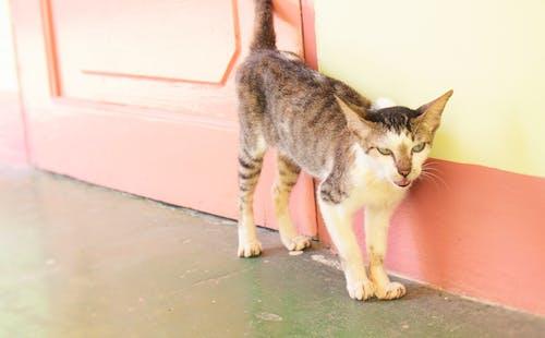 Gratis lagerfoto af dyr, gade, kat, vildfaren