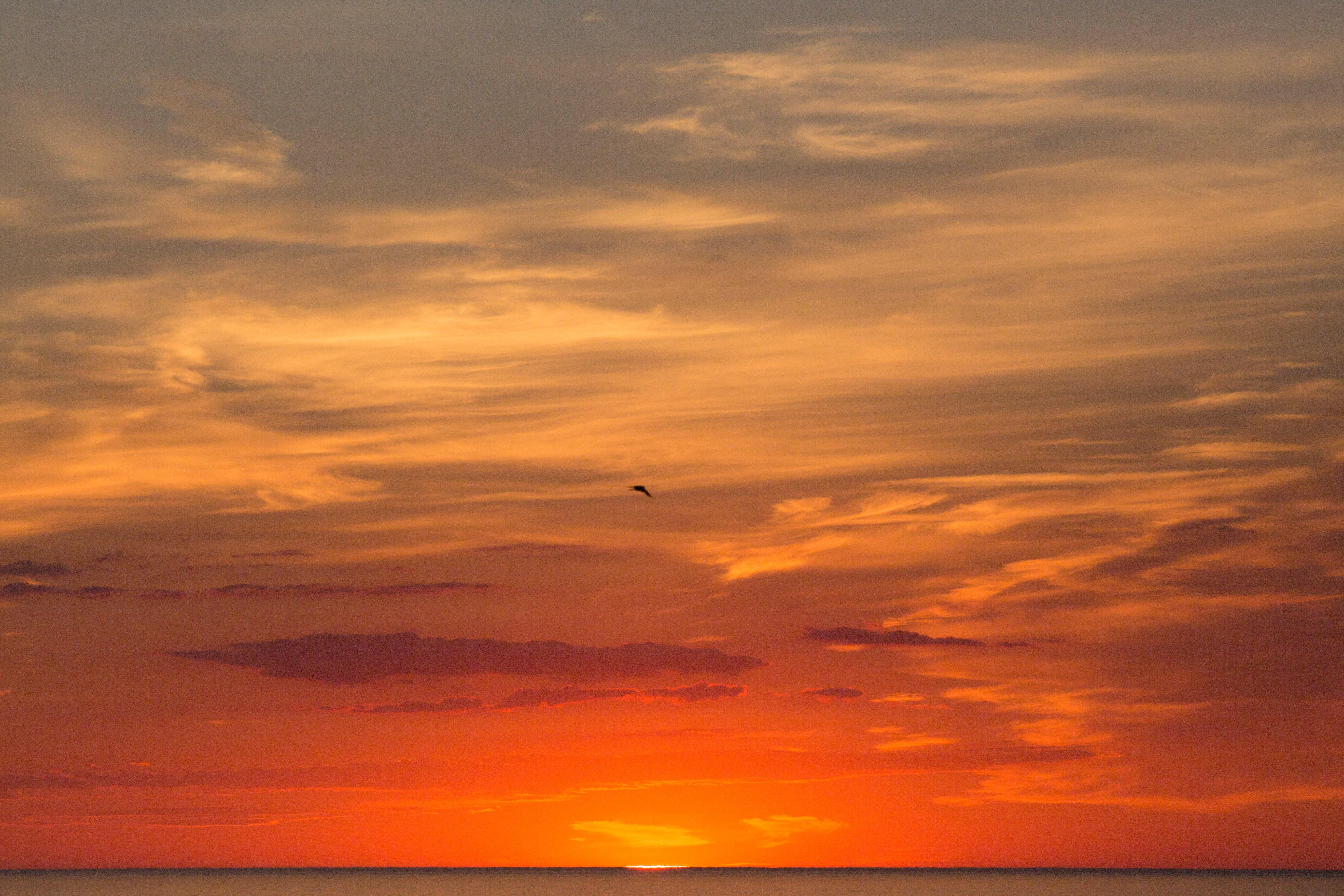 Free stock photo of bird, cape cod, clouds, early morning