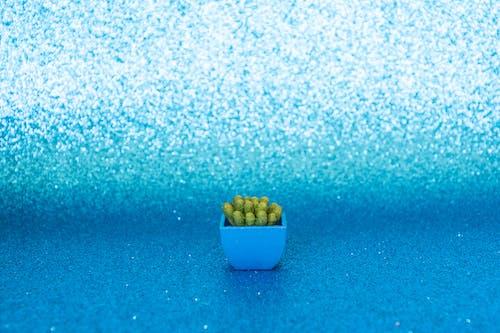 Gratis stockfoto met achtergrond, binnenshuis, blauw, bloempot