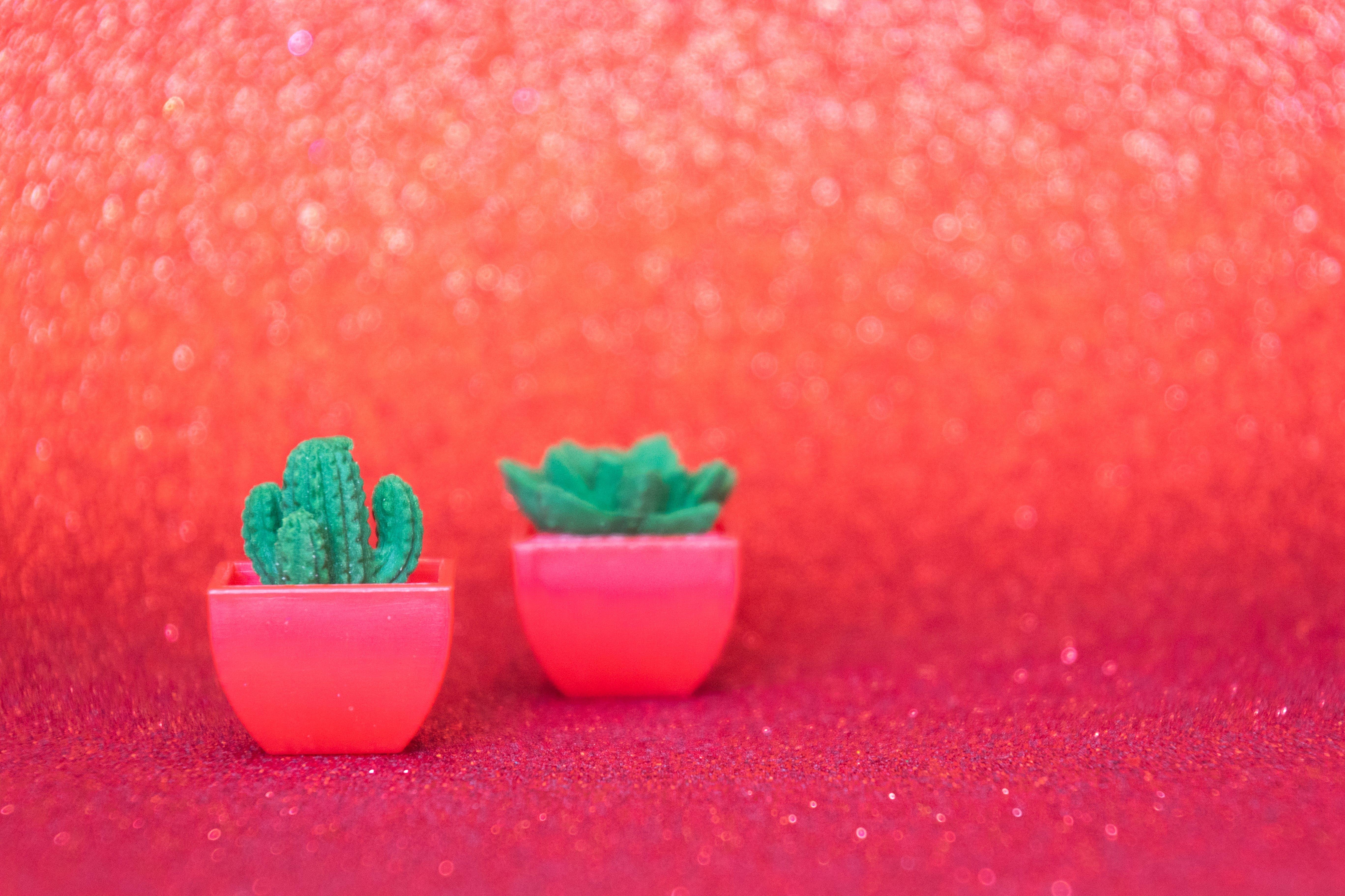 cactus, macetas, ollas