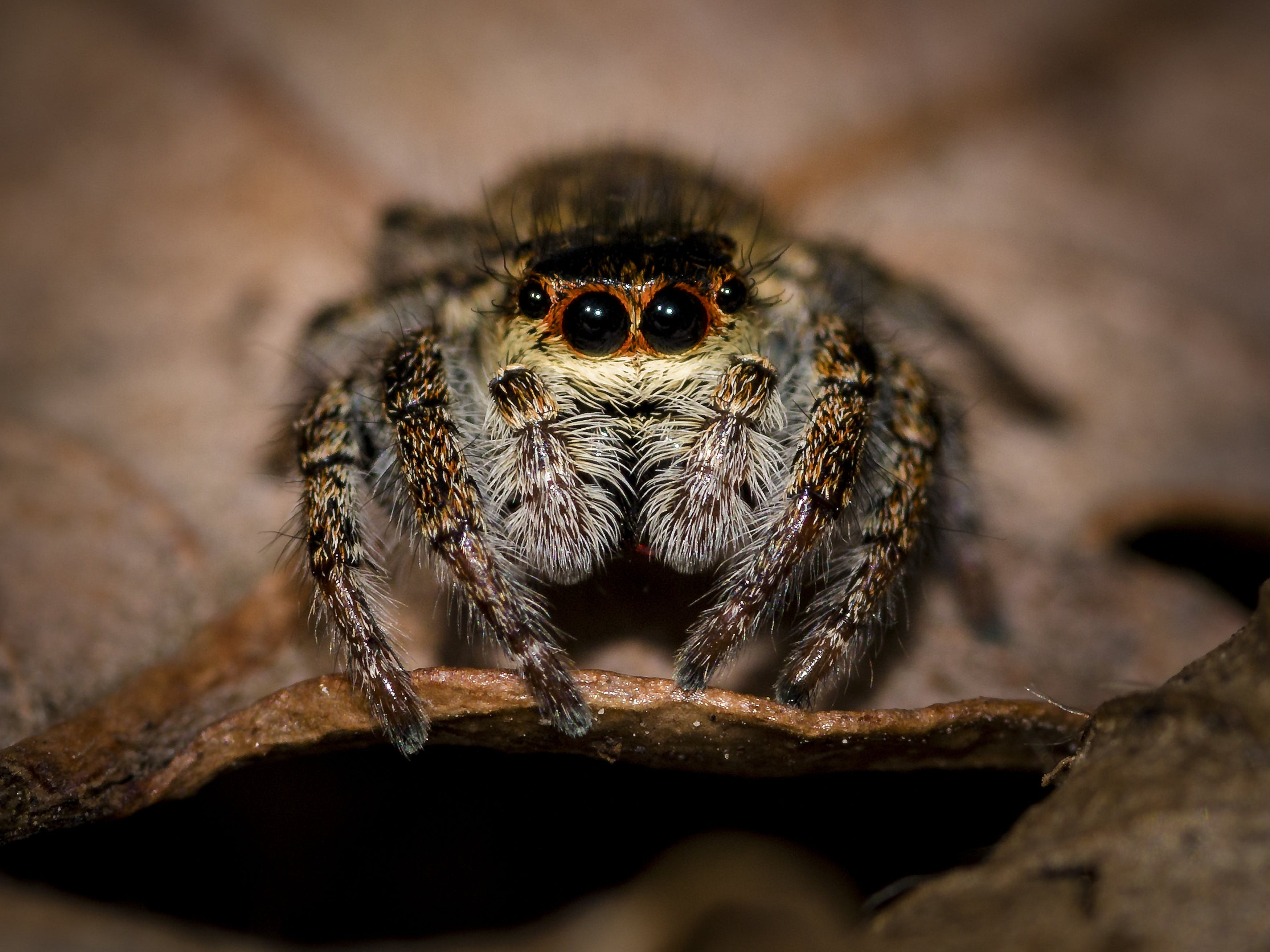 animal, arachnid, close-up