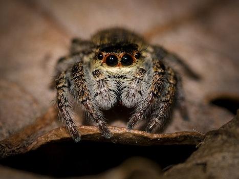 Free stock photo of animal, hairy, macro, spider