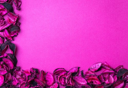 Photo of Pink Flowers on Pink Textile