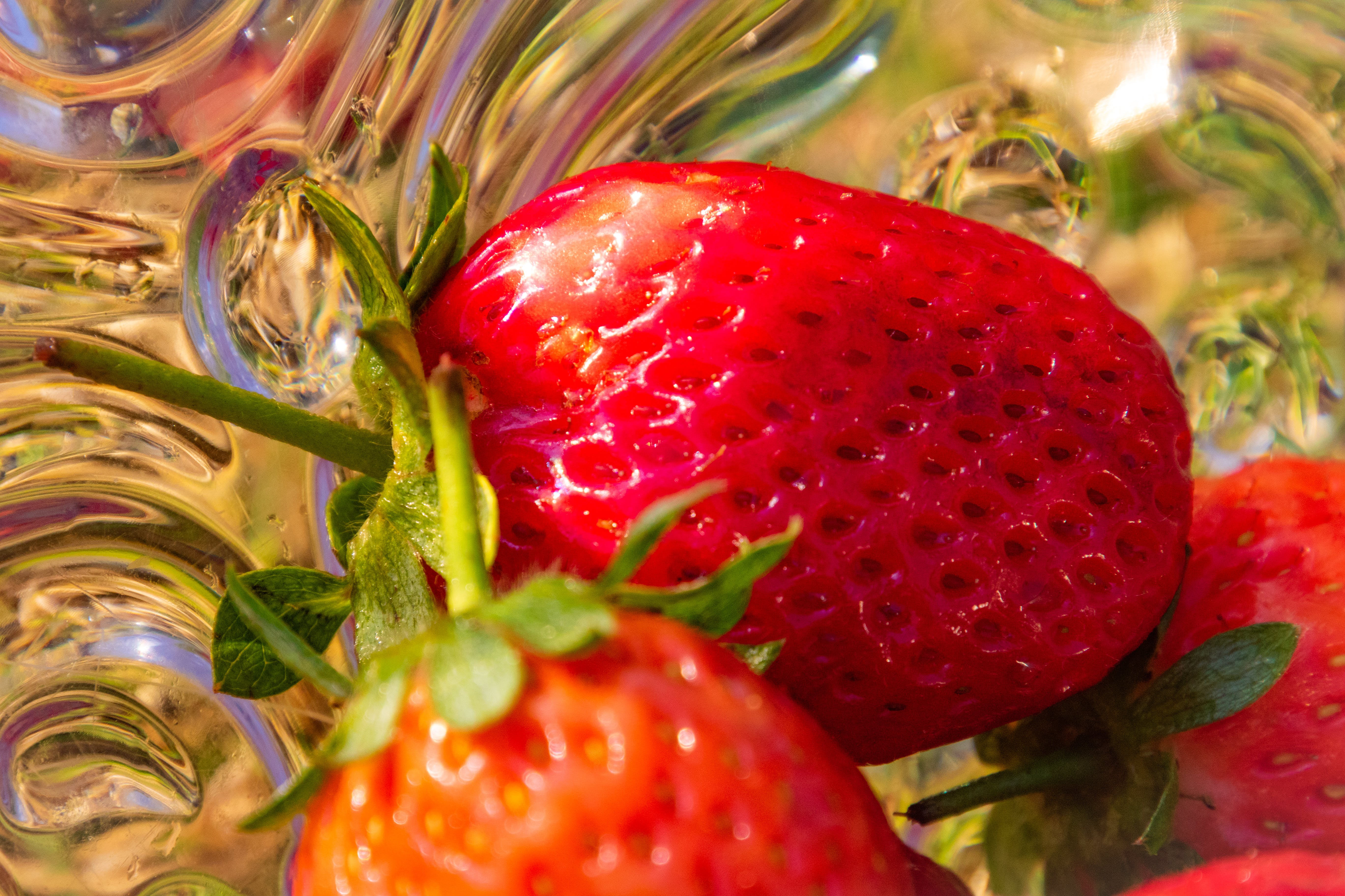 Free stock photo of food, nature, red, strawberries
