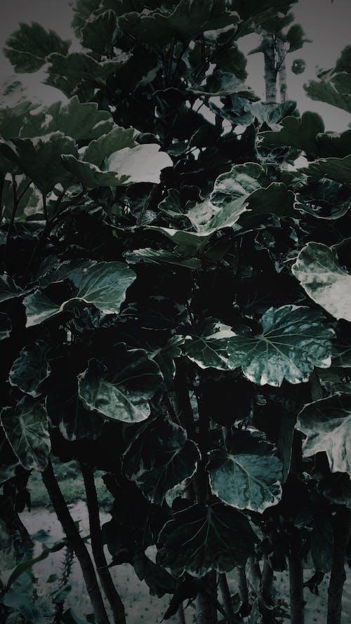 Foto profissional grátis de folhas escuras, plantas, plantas verde-escuras, verde-escuro