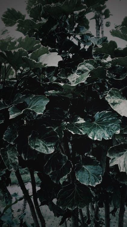 Foto stok gratis daun gelap, hijau tua, tanaman