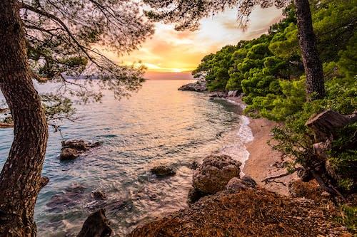 Δωρεάν στοκ φωτογραφιών με Αδριατική θάλασσα, ακτή, γραφικός, δέντρα