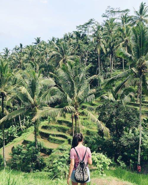 Kostnadsfri bild av dagsljus, grön, kokospalmer, kvinna