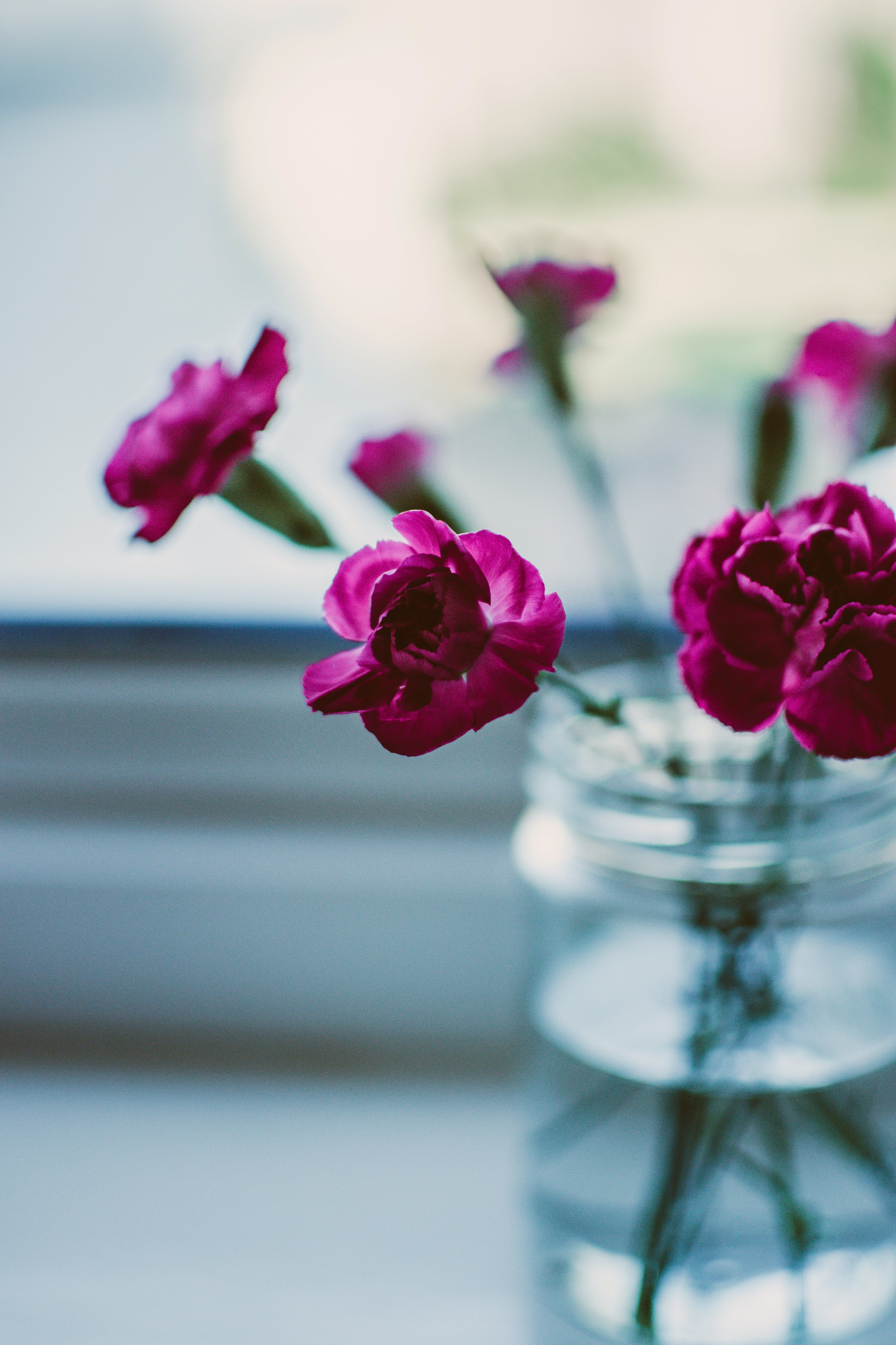 Selective Focus Photography Of Pink Petaled Flowers On Clear Glass Jar