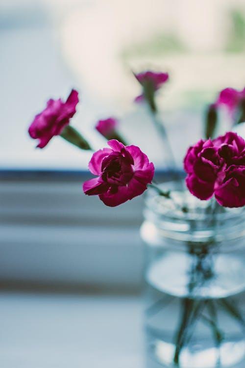 Δωρεάν στοκ φωτογραφιών με macro, ανθίζω, άνθος, βάζο