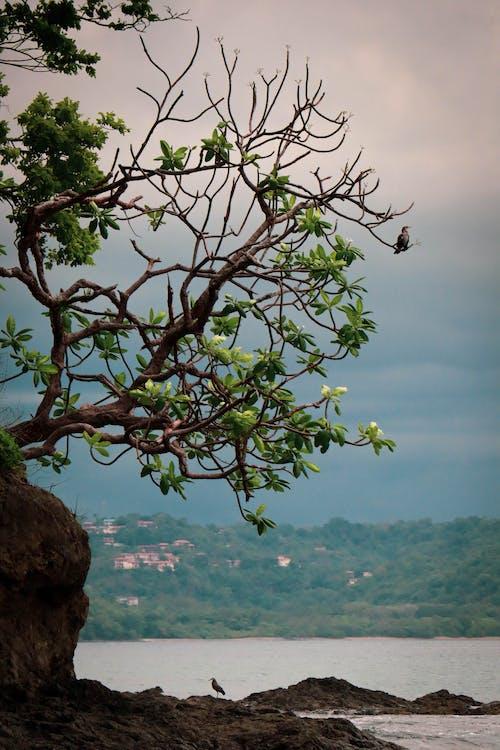 Free stock photo of adventure, animal photography, costarica, sunset