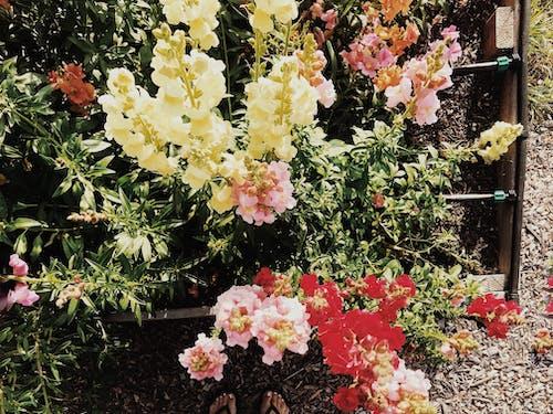 Foto profissional grátis de canteiro de flores, flores, flores bonitas, flores lindas