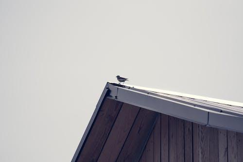 Kostenloses Stock Foto zu dach, sommer, vogel zwitschern
