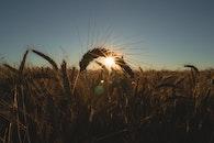 bread, light, sunset