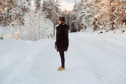 Gratis lagerfoto af bjerg, forkølelse, frossen, frost