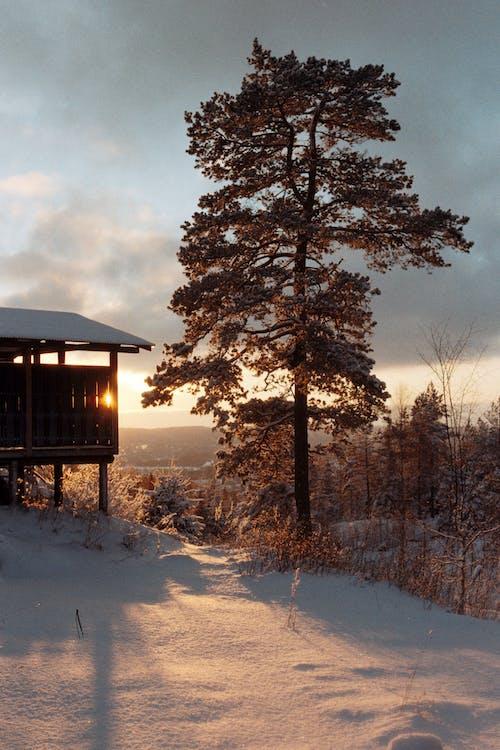 Gratis stockfoto met boom, hut, schuur, sneeuw