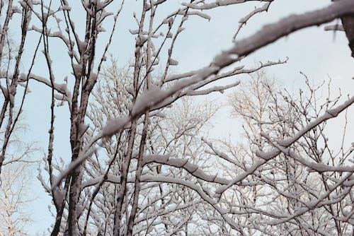 Gratis stockfoto met Bos, sneeuw, takken, winter