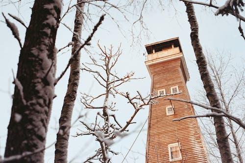Gratis stockfoto met bomen, Bos, jagen, sneeuw