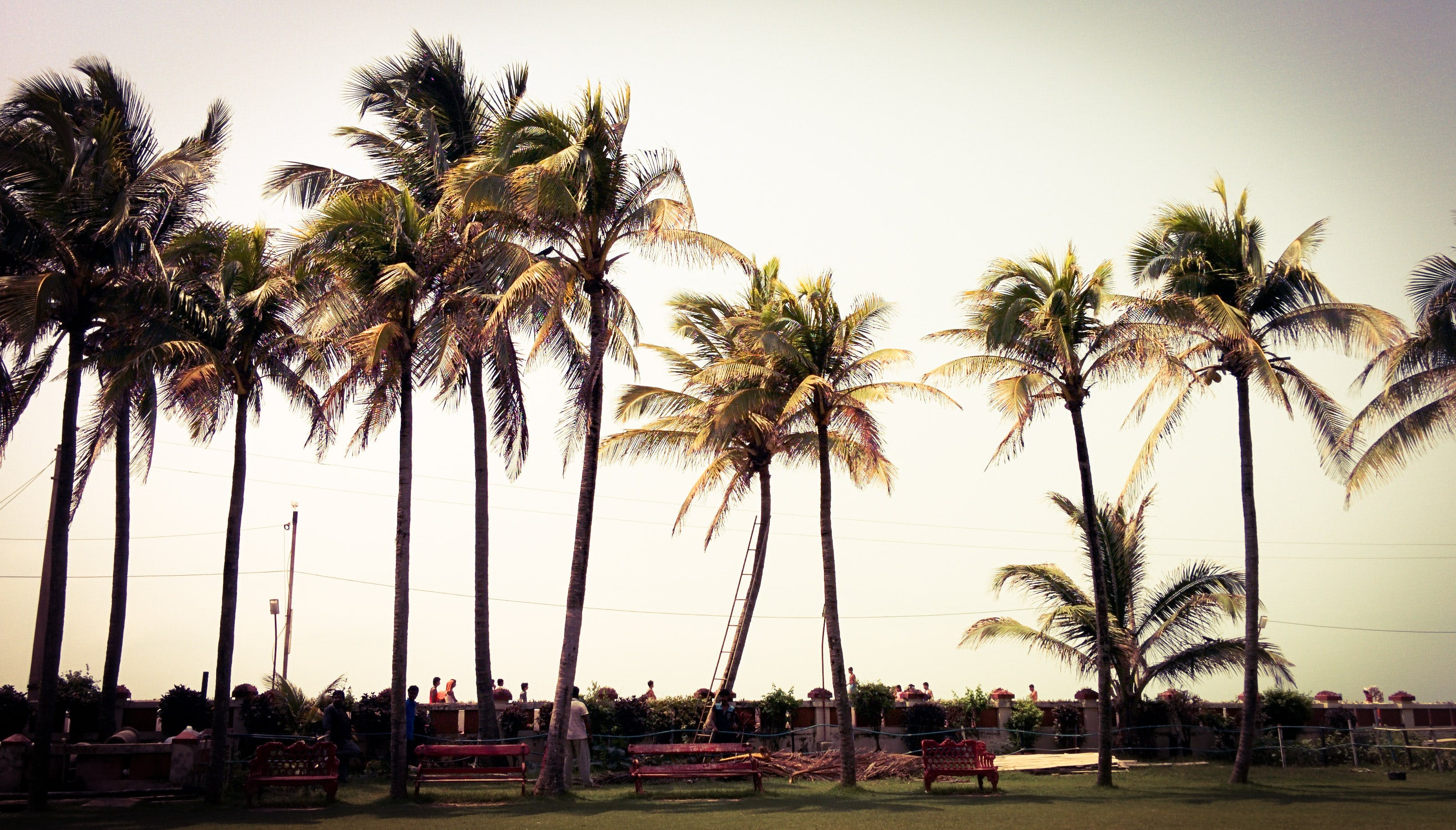 benches, coconut trees, coconuts