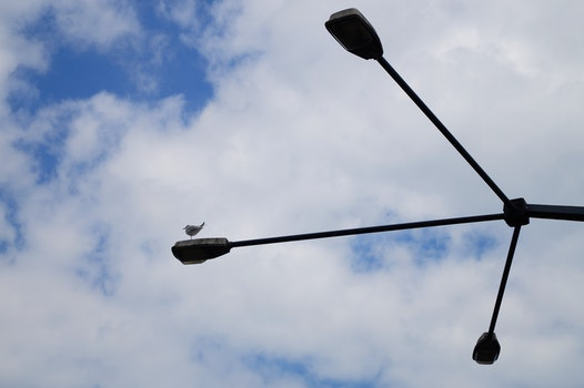 Free stock photo of sky, bird, lights, clouds