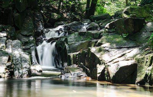 Бесплатное стоковое фото с водопад, водопады, гладкий, лес