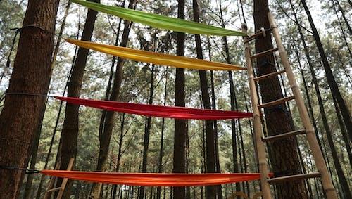 Foto d'estoc gratuïta de bosc, escales, pins
