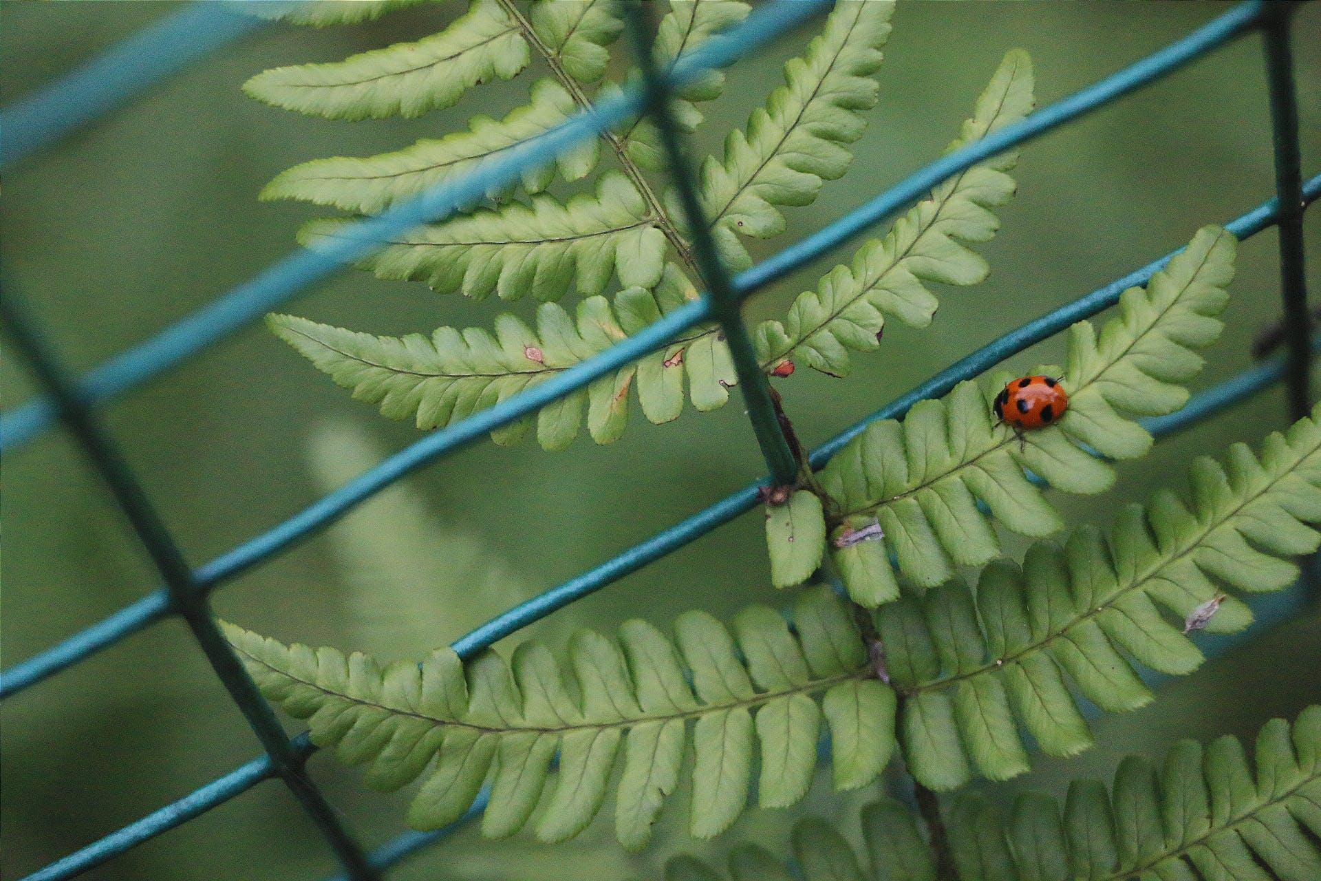 Free stock photo of green, ladybug, plant