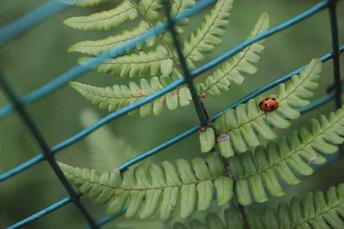 工厂, 瓢蟲, 綠色 的 免费素材照片