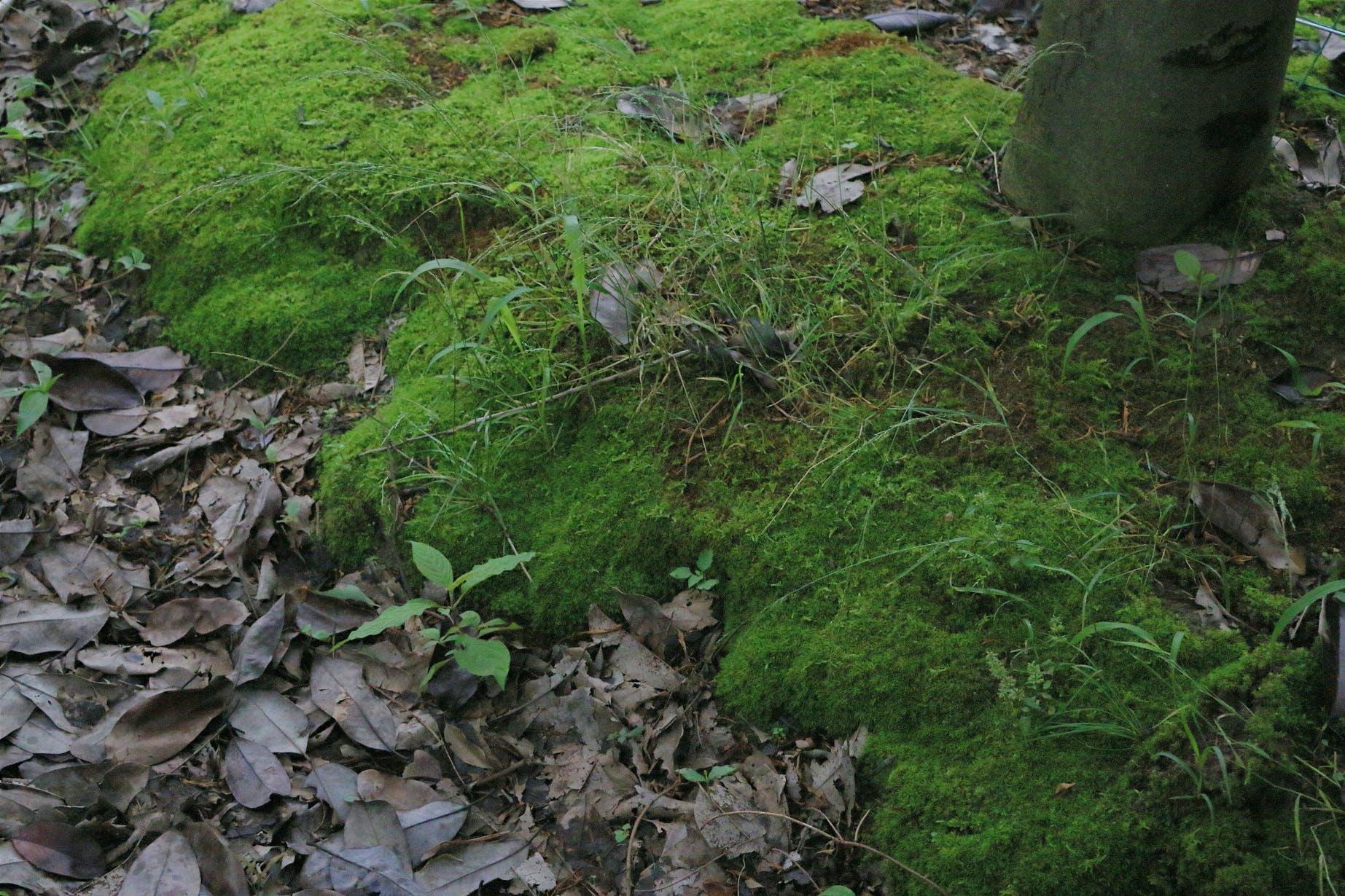 Free stock photo of green, moss