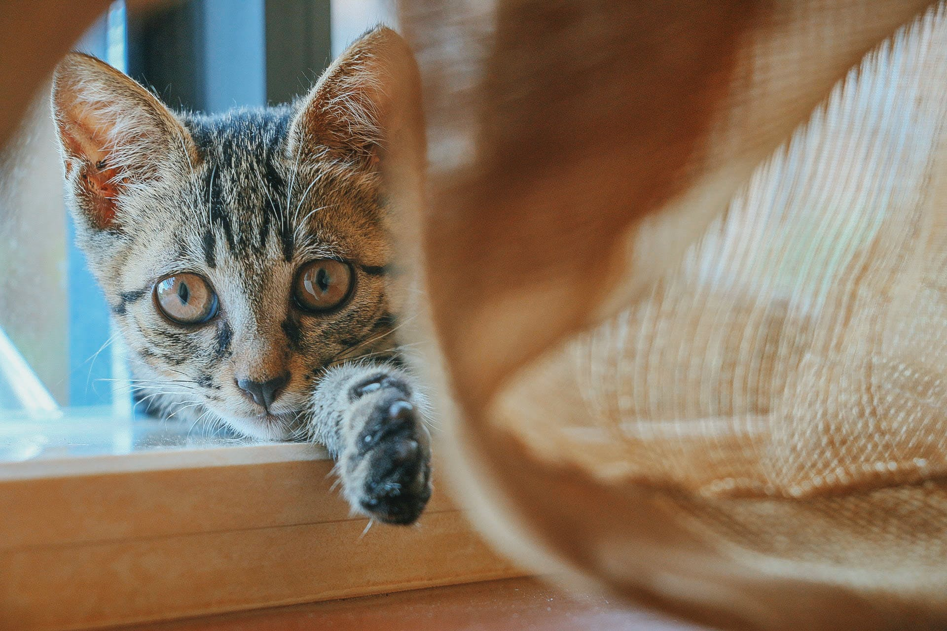 adorable, animal, cat