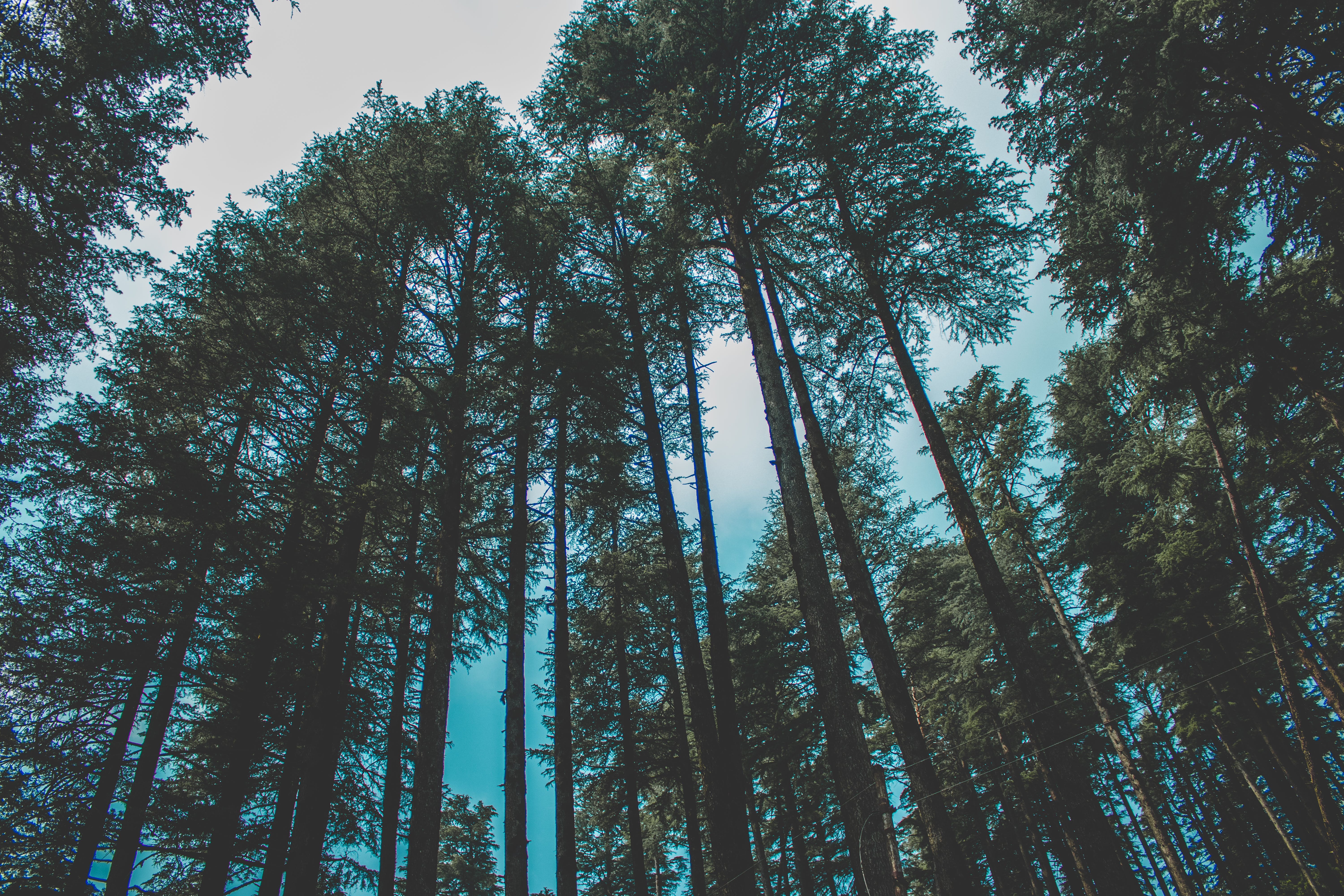 Worm's Eye View Photography of Forest Trees