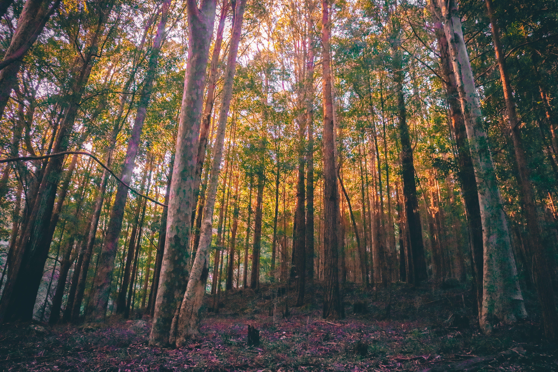 ağaç, doğa, orman, yeşil içeren Ücretsiz stok fotoğraf
