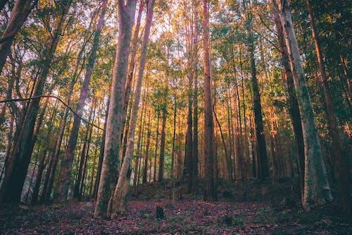 Gratis arkivbilde med grønn, natur, skog