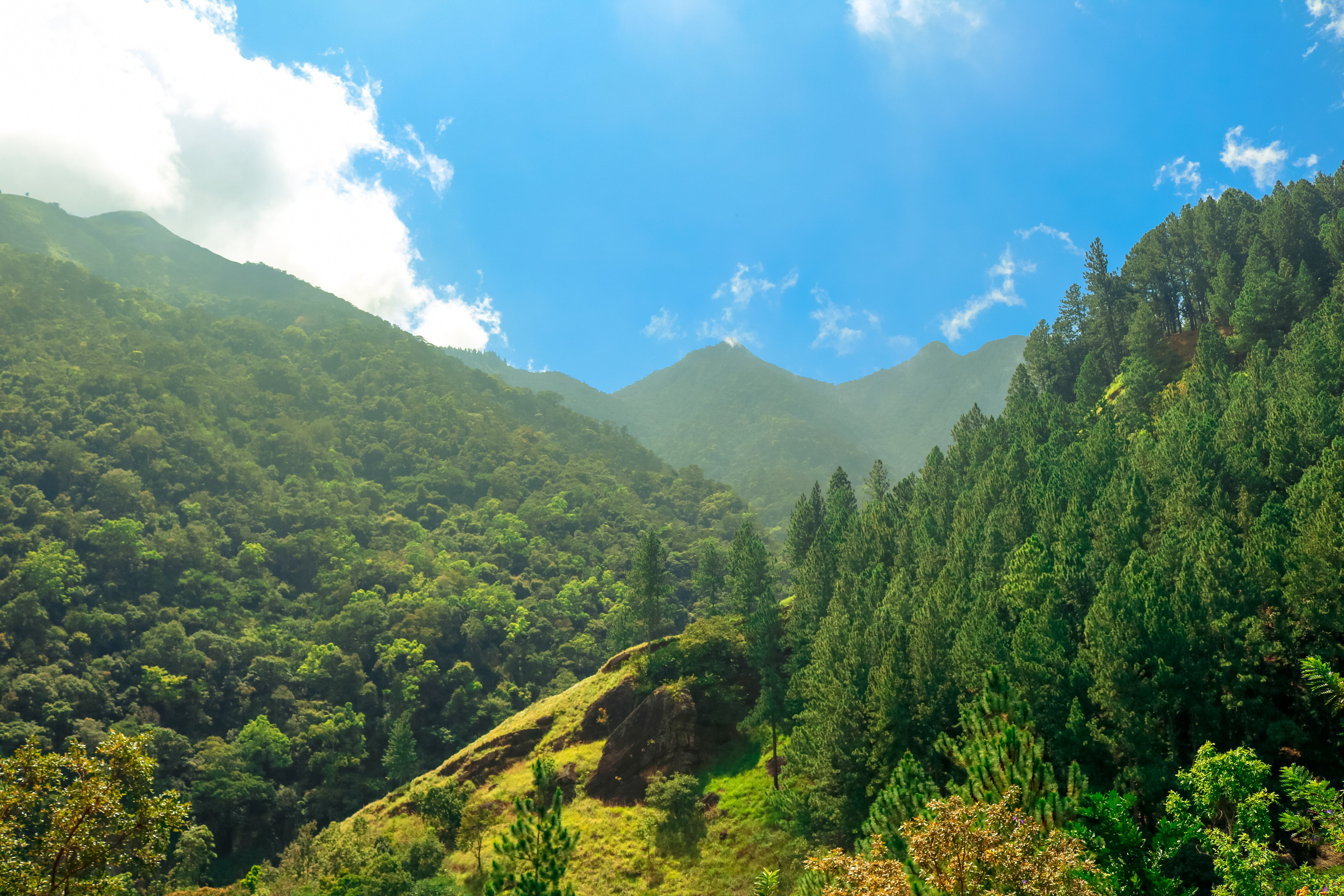 Free stock photo of blue sky, cloud, forest, green