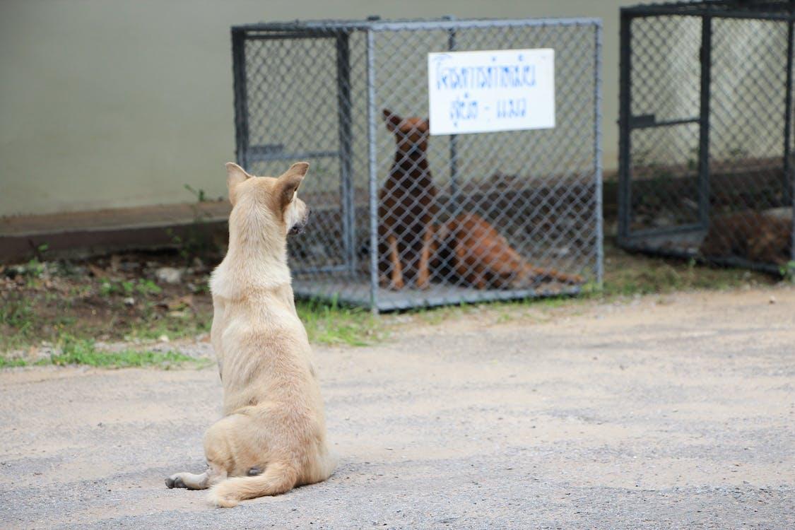 動物, 危險, 可愛的