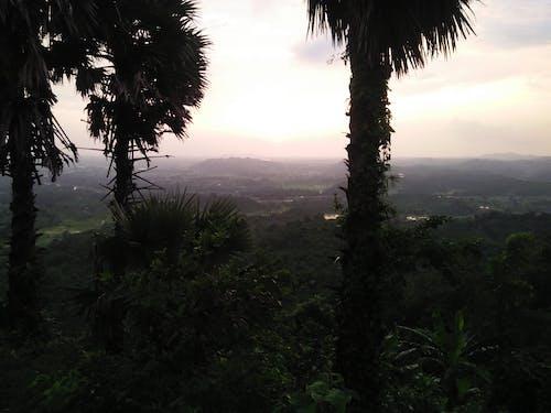 Безкоштовне стокове фото на тему «дерево тоді»
