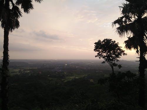 Безкоштовне стокове фото на тему «дерево двійки тодді»