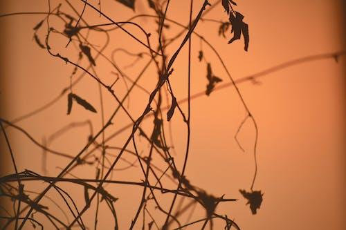 Fotos de stock gratuitas de amantes, Canon, fotografía de naturaleza, lente