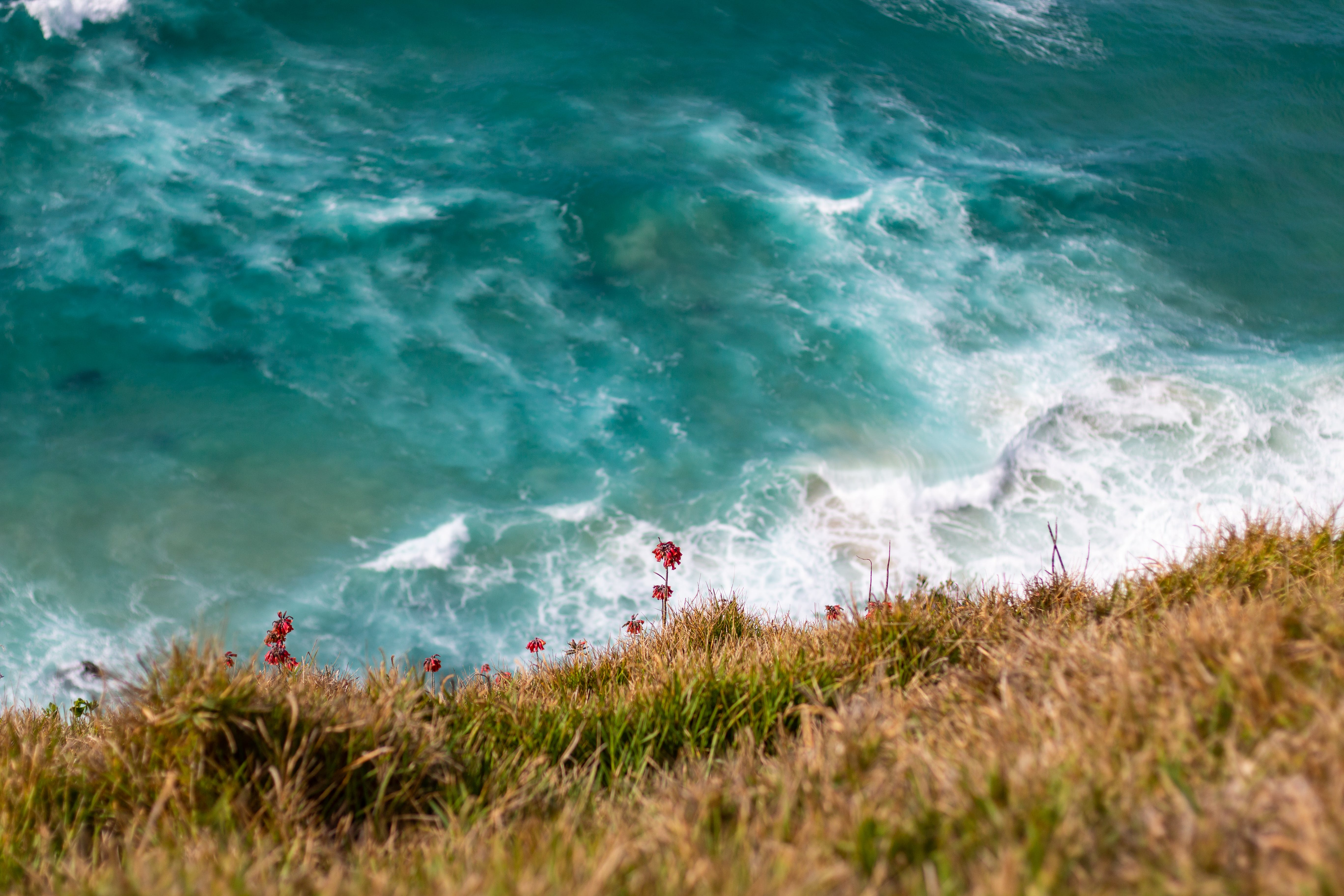 Top View Photography of Hill With Red Flowers Across Beach Waves